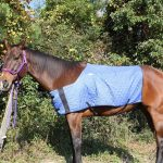 HyperKewl Evaporative Cooling Horse Blanket – Large/X-Large