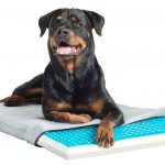 Pet Therapeutics TheraCool Gel Cell Cooling Pad with Tri Core Charcoal-Infused Memory Foam