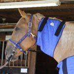 HyperKewl Evaporative Cooling Horse Neck Wrap – Medium